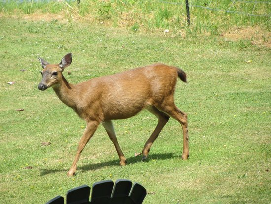 Foxglove Inn and Gardens: Lovely wildlife roaming the property