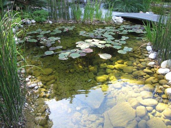 Maison Pic : Petit étang avec nénuphars