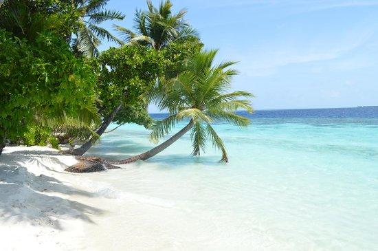Vilamendhoo Island Resort & Spa : И так почти везде