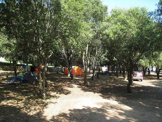 Camping Cavallo Morto : emplacement