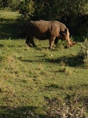 Fairmont Mara Safari Club : Rhino in the Mara Reserve