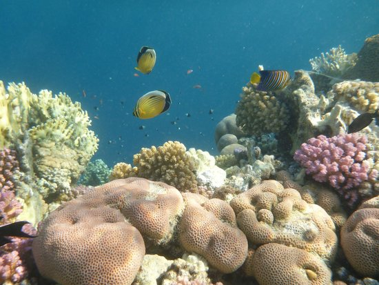 The Palace Port Ghalib : House reef