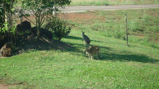 Kakadu National Park, Australien: may 2014
