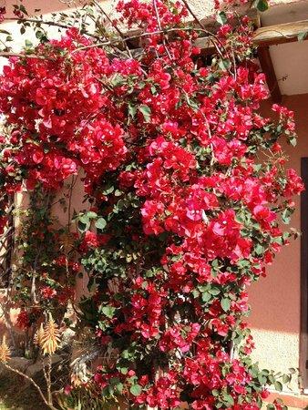 Residence Riva Azzurra: Liebevoller Blumenschmuck
