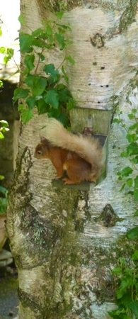 Netherfield Bed and Breakfast: Netherfield B & B : resident red squirrel