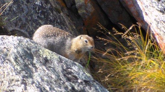 Dixie Divers: Furry little dude having lunch.