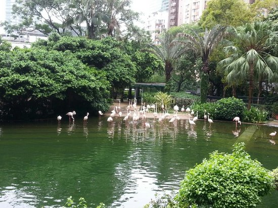 Kowloon Park: kowloon 3
