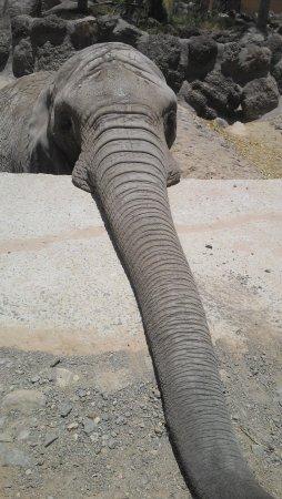 Oasis Park Fuerteventura: Our new friend