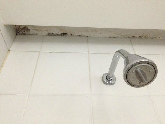 Hotel Sesc Copacabana: Shower with mold