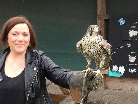Stockley Farm Birds of Prey Centre: Falcon! Fighter jet of the birds