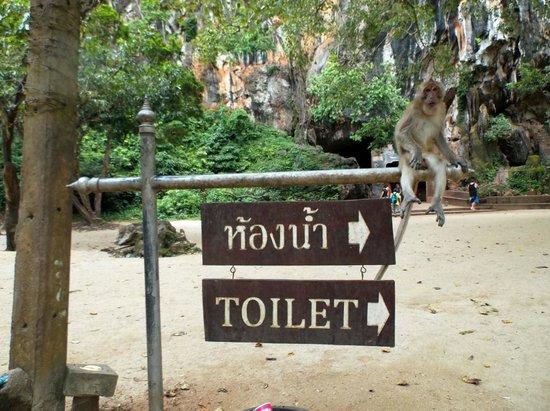 Wat Suwan Kuha (Cave Temple): scimmia segnaletica