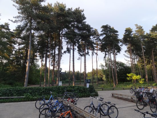 Center Parcs Elveden Forest: Bike park