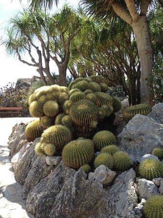 Exotic Garden (Jardin Exotique): Кактусы оч колючие, не упадите в них)))))