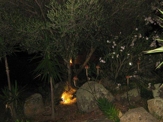 Agriturismo Monti Tundu: Piante in fiore