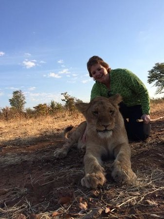 Walking with Lions at Victoria Falls: truly awsome