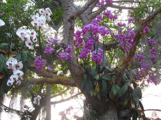 Phra Tamnak Kwan Phayao and Phayao Fresh-water Fishery Station: Les orchidés de la promenade le long du lac