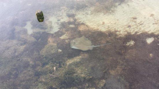 Lime Tree Bay Resort : New Friend