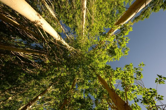 Ladakh Sarai: Trees in Hotel Compoiund