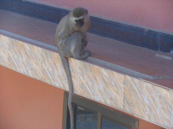 Penguin Resort Hotel: Monkey hanging around  room balcony side.