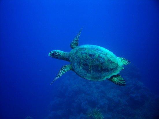 Marina Lodge at Port Ghalib: Über die Unterwasserwelt brauchen wir nicht reden...