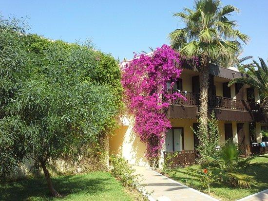 Hotel Paradis Palace: camere vista giardino