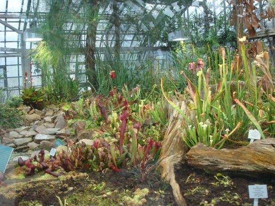 Palmengarten und Botanischer Garten: Interno serra (piante carnivore)