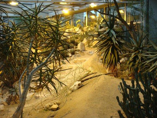 Palmengarten und Botanischer Garten: Serra deserto