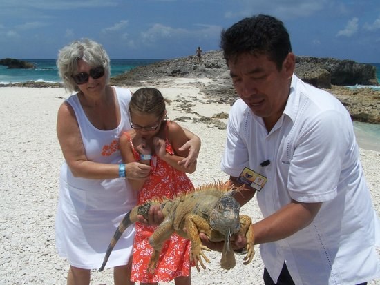 Safe Tours Cozumel: Our first experience with iguanas