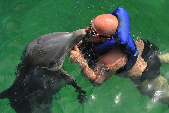 Dolphin Explorer: un grand moment
