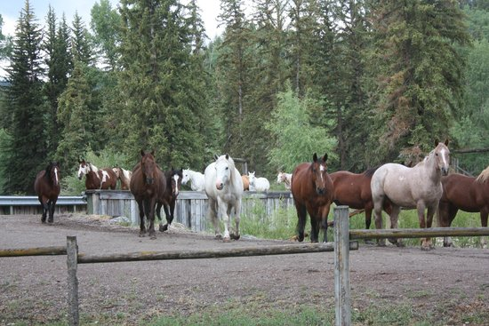 Spotted Horse Ranch : horses coming in to barn