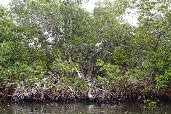 Tarpon Bay Explorers: bird