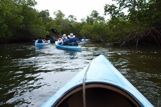 Tarpon Bay Explorers: canoe