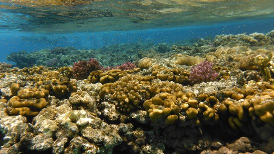 Lahami Bay Resort : coralli