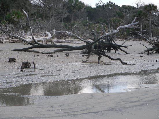 Botany Bay Plantation Heritage Preserve and Wildlife Management Area: Undisturbed nature