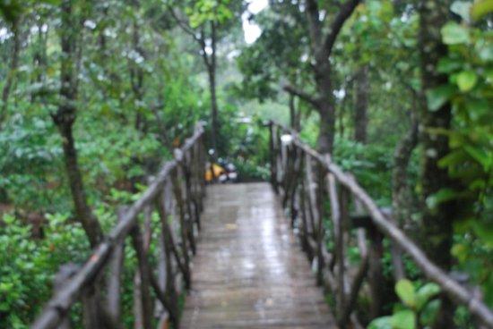 Aanavilasam Luxury Plantation House : The walk way