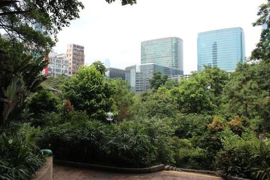 Kowloon Park: 街中に突然現れるジャングルみたいな公園だった。