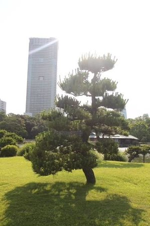 Royal Park Hotel The Shiodome, Tokyo : view from park into area hotel