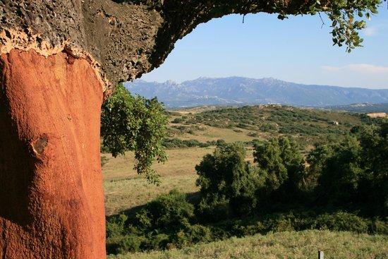 Farmhouse Stazzo  La Cerra: Kurkeik