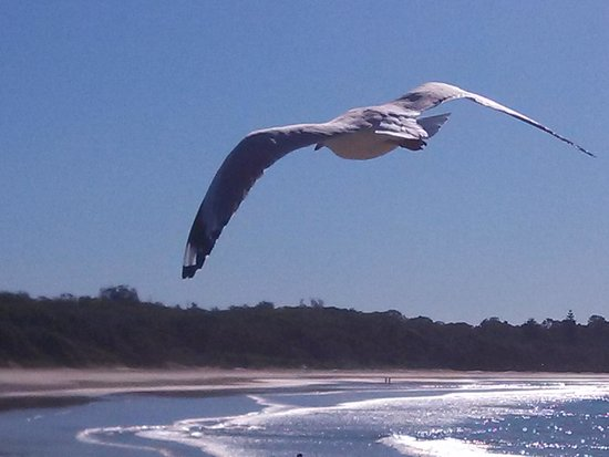 Smugglers on the Beach: My quick pic of the seagul on the beautiful Coffs Beachs