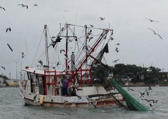 BayWatch Dolphin Tours: Working shrimp boat hauling in its nets. Lots of bird life to enjoy too.