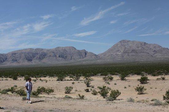 Mojave Desert : Lindo!!!
