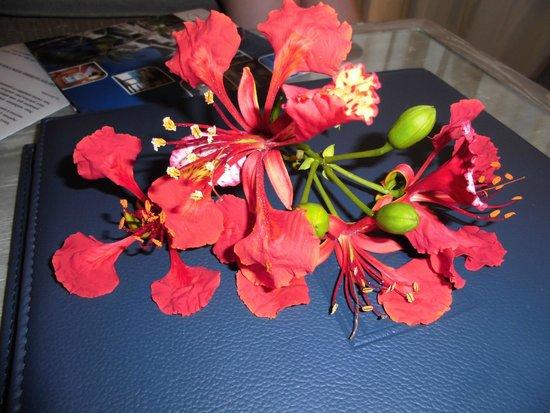 Hotel Boucan Canot: fleur accueil chambre