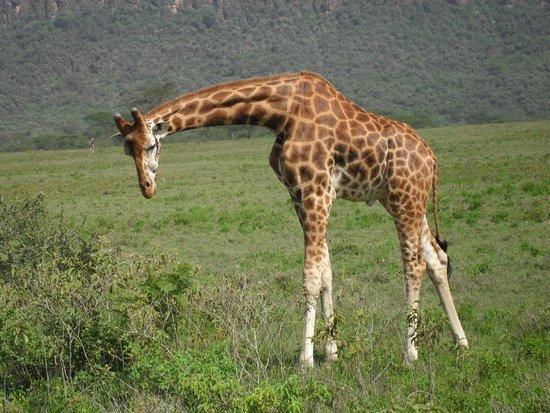 Big Time Safari Camp: Amboselli