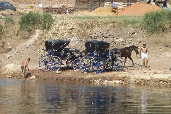 Nile River: Coachmen watering their horses
