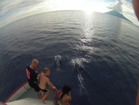 Tasik Ria Resort Manado: Delphine