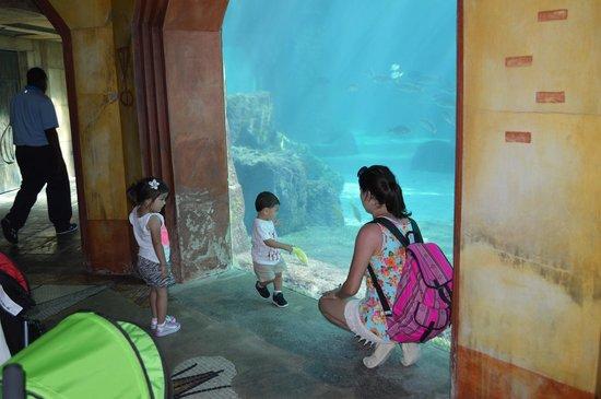 Marine Habitat at Atlantis: family pic