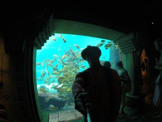 Marine Habitat at Atlantis: Atlantis Aquarium