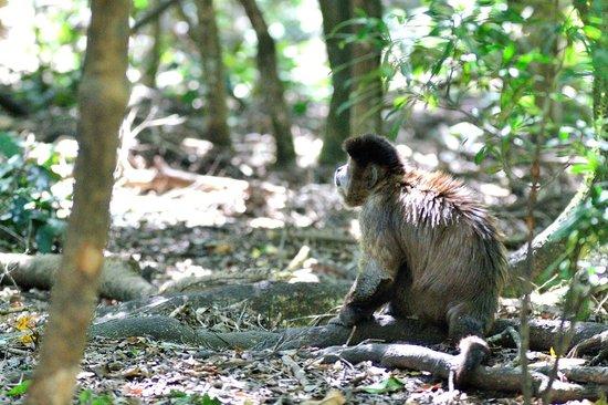 Monkeyland Primate Sanctuary: Les singes y sont en semi-liberté, soignés et nourris. Très respectueux.