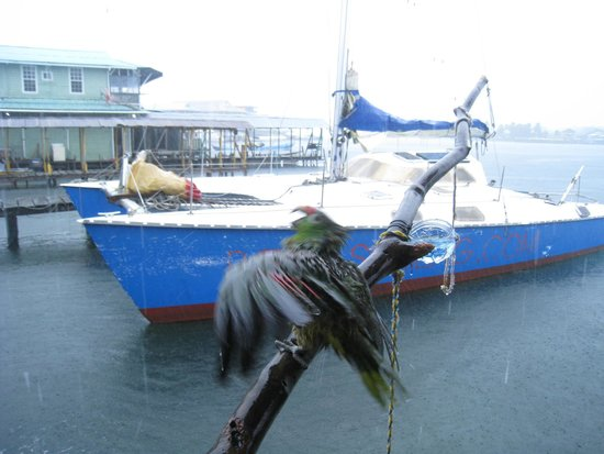 La Buga Dive Center & Surf School: Pinata the parrot dancing in the rain