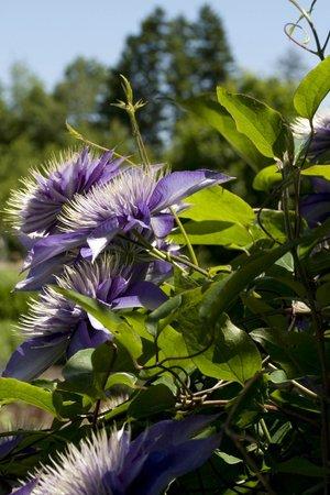 Coastal Maine Botanical Gardens: In the Perennial Garden